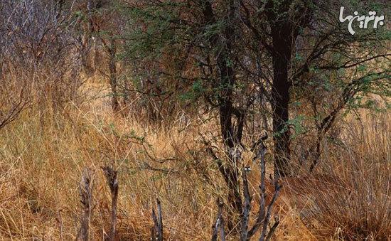 می توانید حیوانات مخفی شده در این تصاویر را پیدا کنید؟